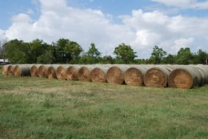 Texas Quality Hay for sale